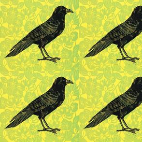 fat crow wallpaper