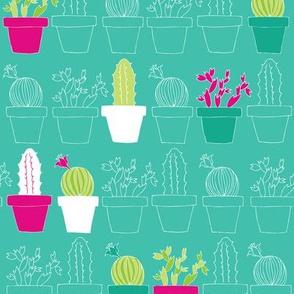 Mini Cactus Joy