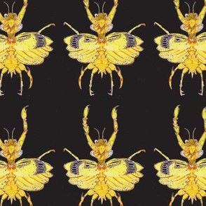 Mantis Bug Dancing in the Dark