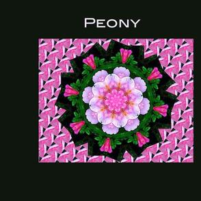 Pink Peony on Black Pillow