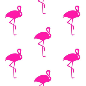 flamingo fucshia