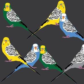 Parakeets Looking at You - Multi/Grey