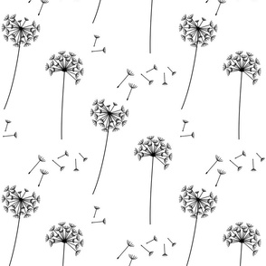 dandelions {1} black and white