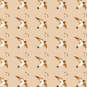 Swallow birds, brown and beige