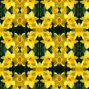 Daffodils_1832