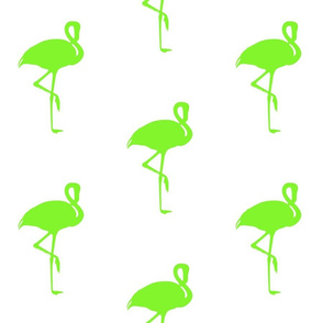 Flamingo Lime