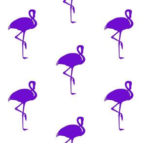 Flamingo Purple
