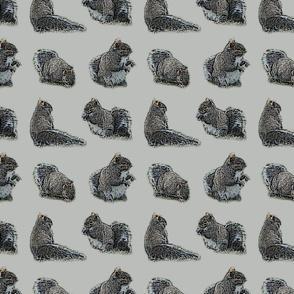 Foraging Squirrels