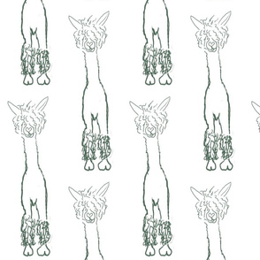 Alpacaluvline