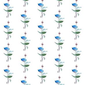 dr2c_blue_poppy_ADJ2_noframe_chopJOUR_copy
