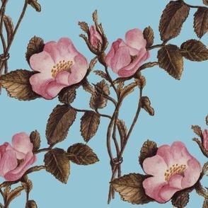 Charlotte Bronte's Wild Roses on Blue
