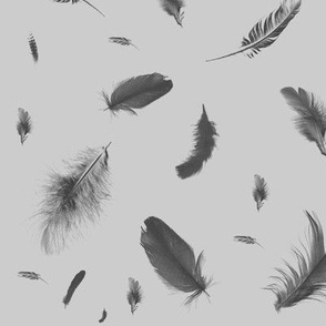 feathers_2