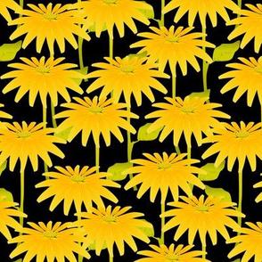 YELLOW FLOWER on black