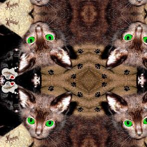 COCOA Kitty