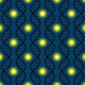 01985260 : firefly DNA argyle