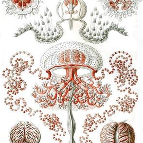 Vintage Jellyfish