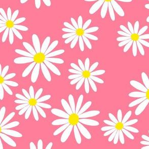 White Daisies, Pink