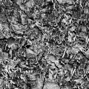 Black Mossy Bark