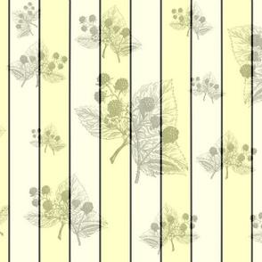 Blackberry Yellow