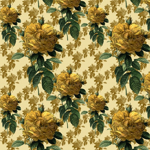 Redoute' Roses ~ Yellow on Cream