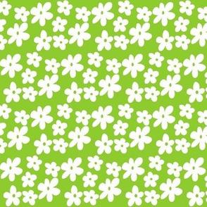 Green Daisy Flowers