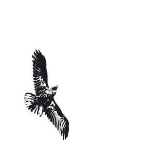 solo_raven