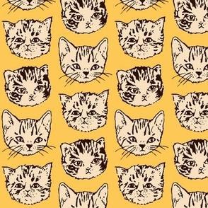 Cute Cats | Orange