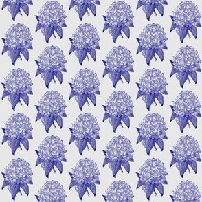 Rhododendron-navy