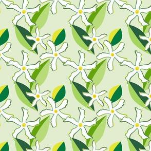 Jasmine Blossoms on Green