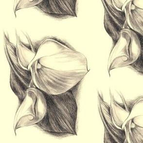 Calla Lilly Drawing