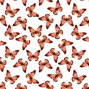 Orange and Pink Butterfly on White