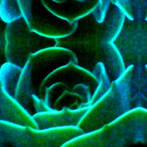 Neon Succulent