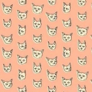 Gritty Kitties | Salmon