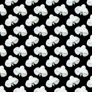 White and Black Phalaenopsis Orchid Pattern
