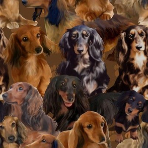 Long Haired Wiener Dogs