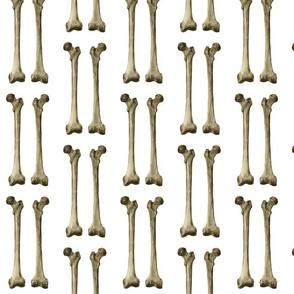 Femur or thigh bone