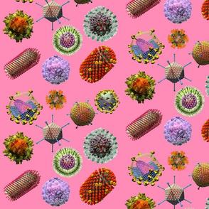 VIRUSES on pink Virus Polka