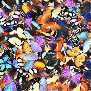 get the butterflies