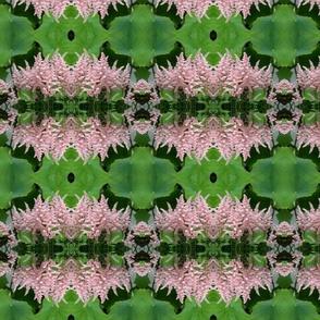 Pink Astilbe 5749