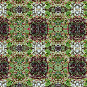 Checkerboard Succulents 5621