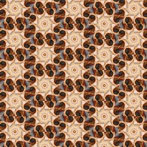 Mandala shell kaleidoscope cropped