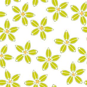 Citrus limes_white