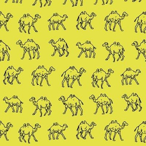Meandering Camels | Yellow