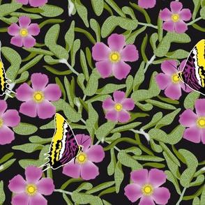 Purple Cistus and Butterflies