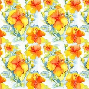 Yellow-orange Hibiscus