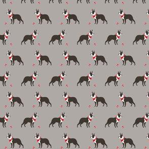 Boston terrier grey tiny