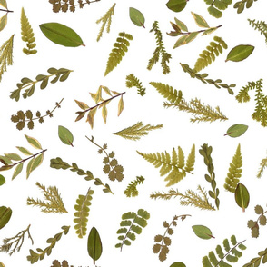 leaf meadow