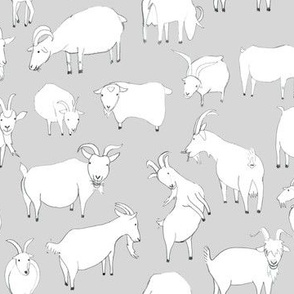 Grey Goats Playing