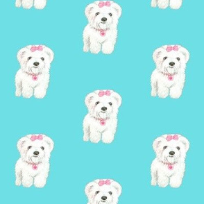 Bichon Frise Cute fluffy dog