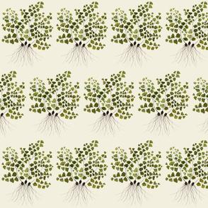 maidenhair fern natural